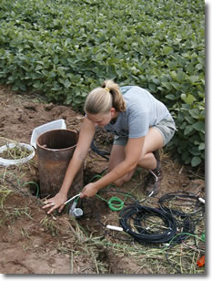 Photo showing woman installing hydrologic instrument at edge of a bean field.