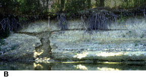 Photo showing cross-sectional view of an ancient sandblow exposed in a bank of the Wabash River.