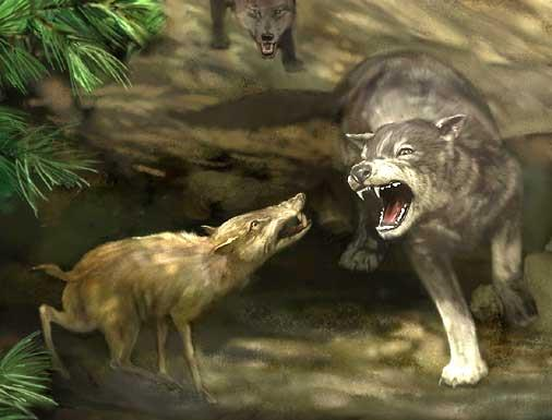 Life reconstruction of Dire wolves and a peccary from Magenity Cave, Indiana (from a painting by Karen Carr, ® Indiana State Museum).