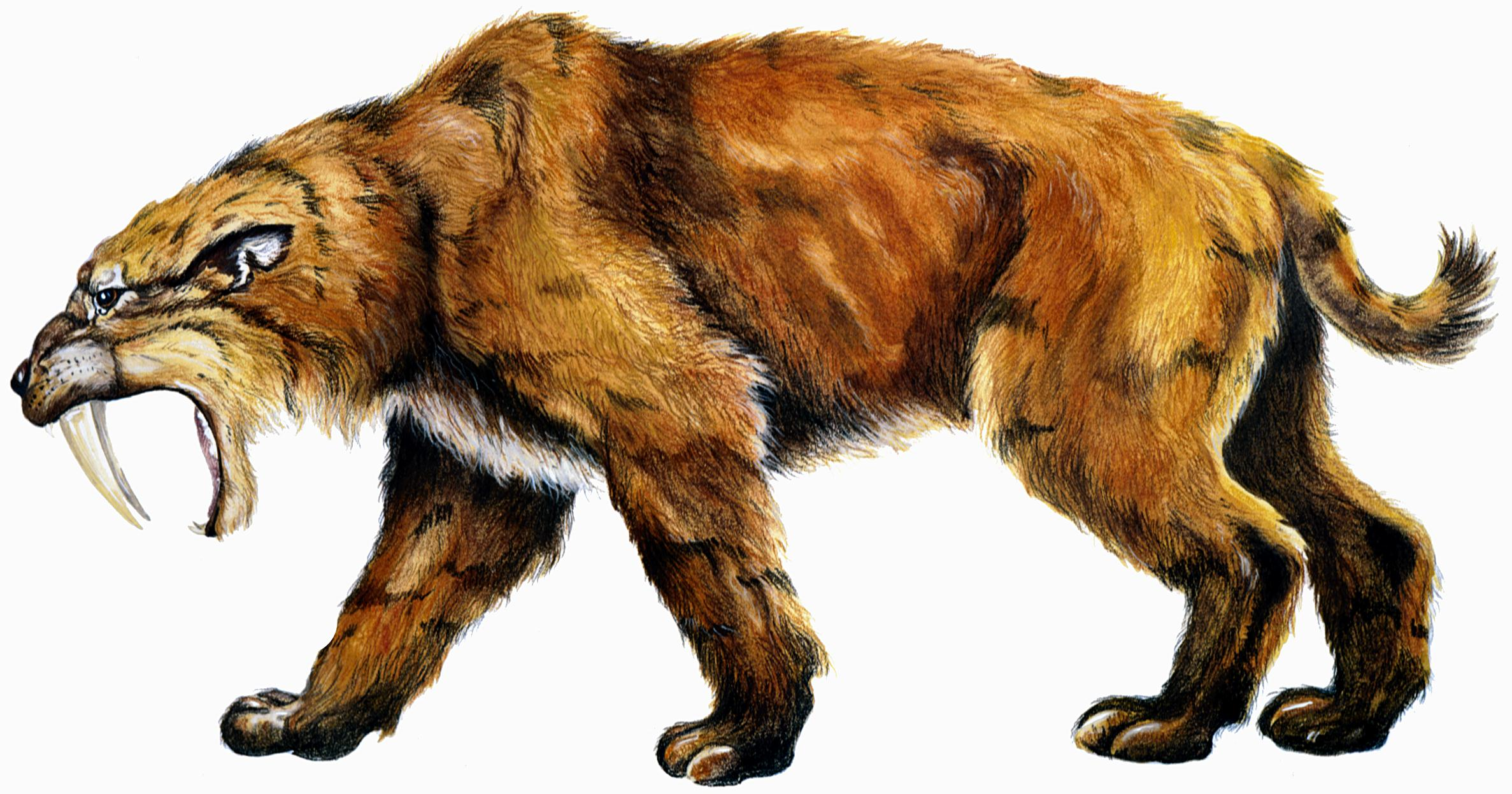 Saber-toothed cat (Smilodon fatalis). Image was generously provided by the Indiana State Museum.