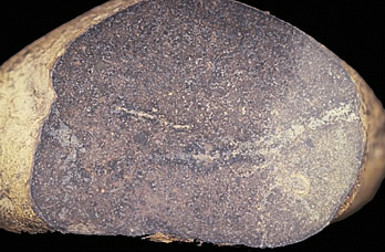 Photo showing the Hangman's Crossing meteorite, which exhibits diagnostic features of a stone meteorite.